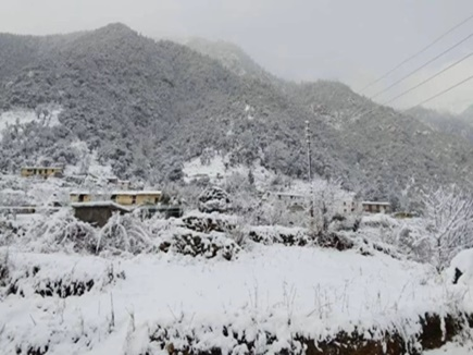 cold wave in Shimla
